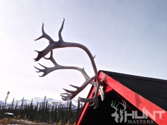 Elk Antlers at the Base Camp