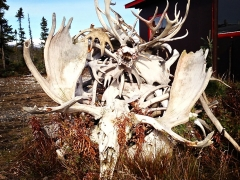 Antlers and Skulls